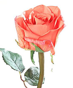 Kunstblumen Sebnitz firmeneintrag sebnitzer kunstblumen deko festartikel gmbh in